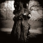 Cherry Trunk, Brandywine Park by Bill Wolff