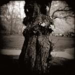 Cherry Trunk, Brandywine Park by Bill Wolff