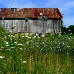 Decaying Barn by Bill Wolff