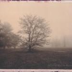 lums-pond-choc-fog-11-570px