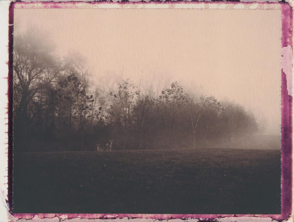 Fog, Frost, Deer