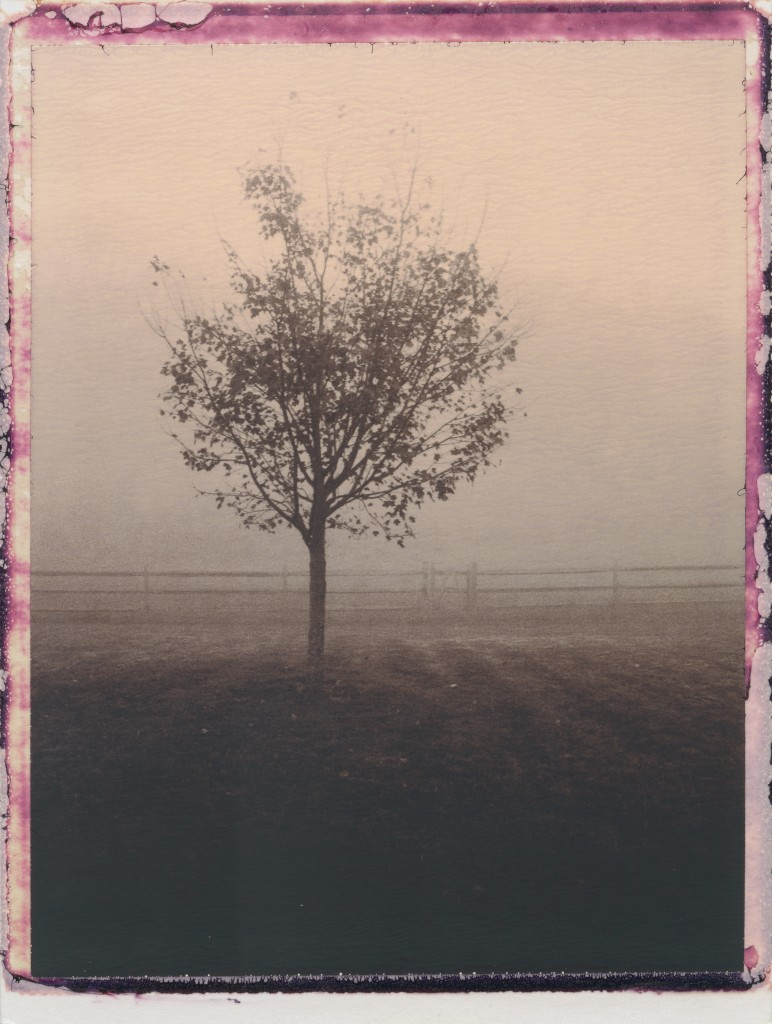 Tree and Fence in Fog